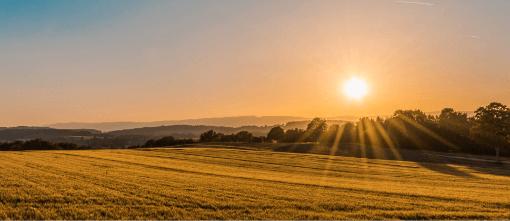 pelto auringonvalossa